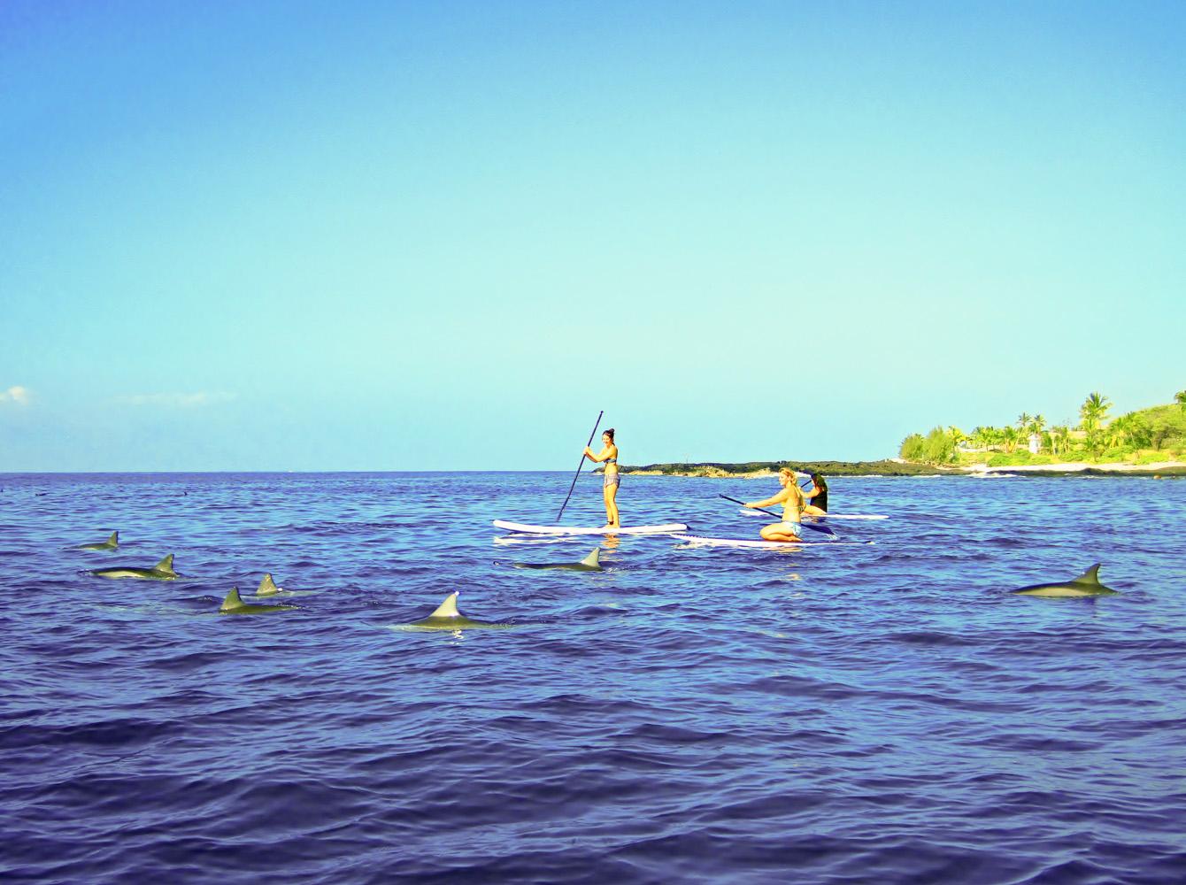 Swim with dolphins • Kona, Big Island, Hawaii •