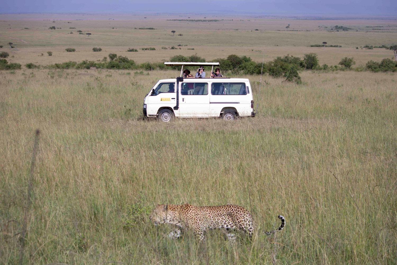 Go on safari • Maasai Mara, Kenya •