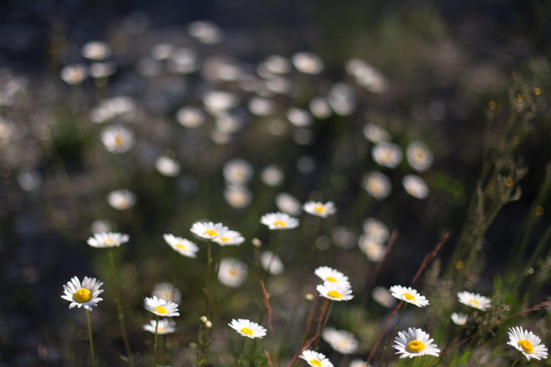 Squamish-Whistler-7529.jpg