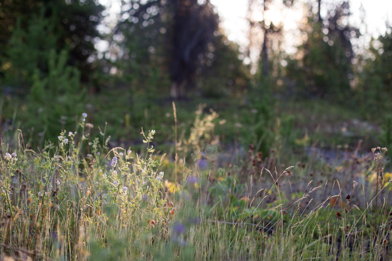 Rockies blog-9273.jpg