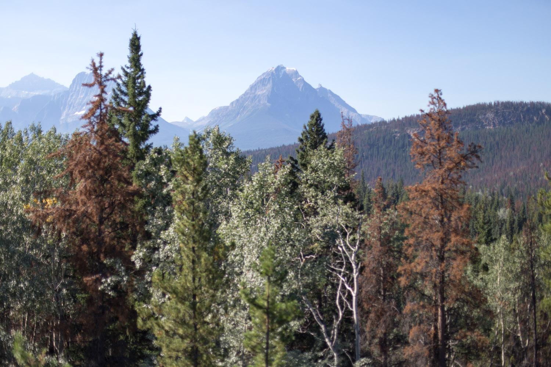 Rockies blog-9283.jpg
