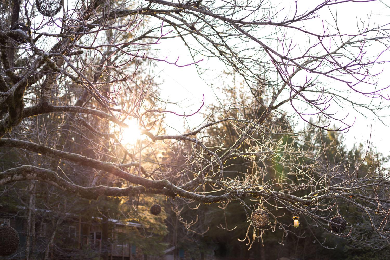 Whistler blog-0434.jpg