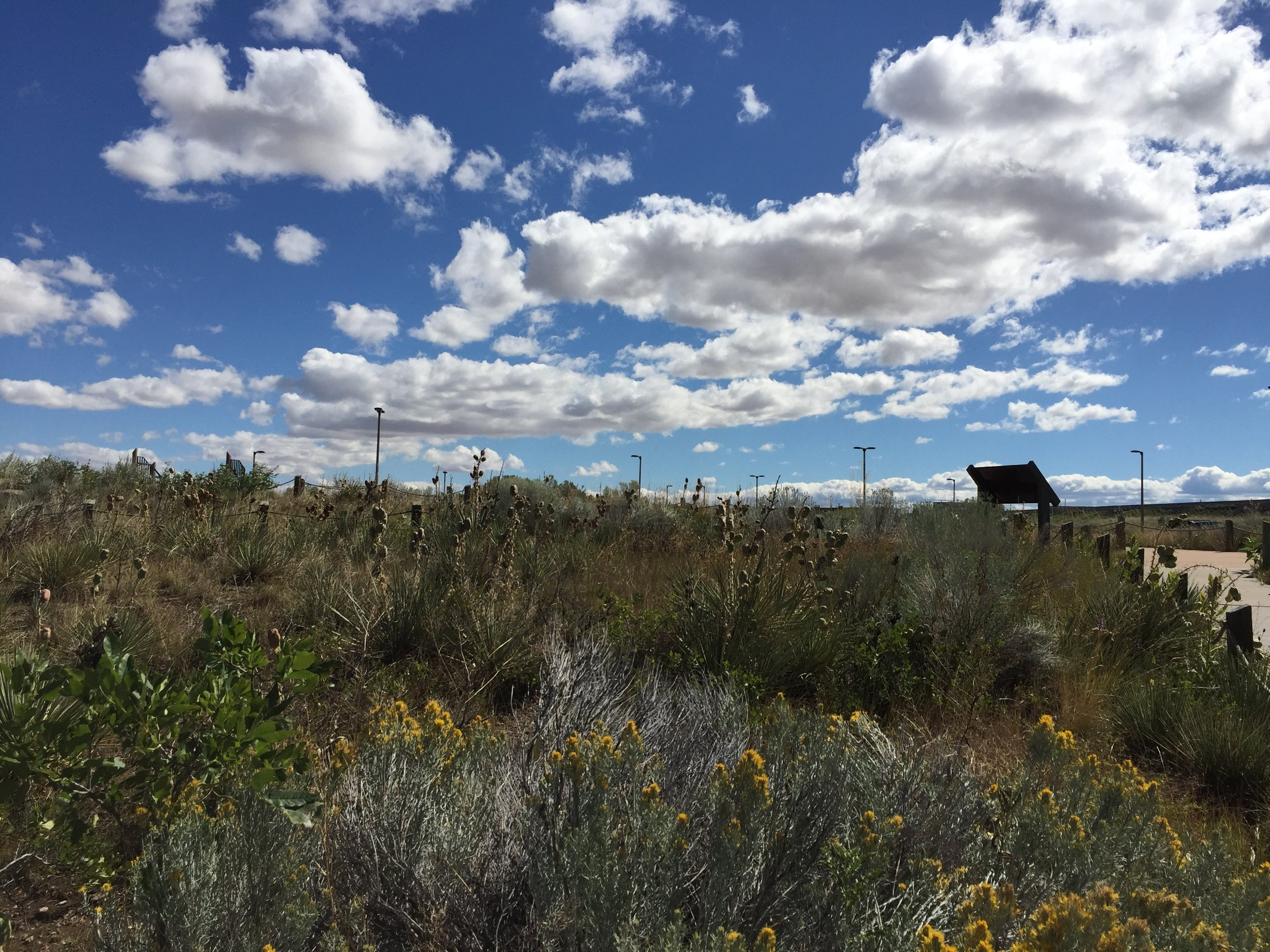 Beautiful skies and native vegetation showcasing the natural beauty at the Lewis & Clark Interpretive Center.