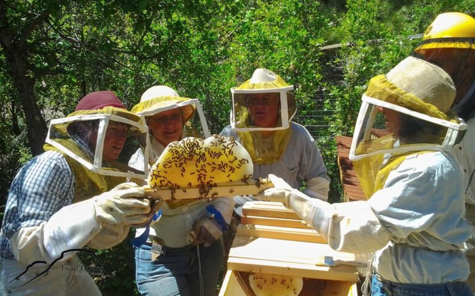 The Twin Buttes gardeners also keep bees…. Photo courtesy of Twin Buttes archives.