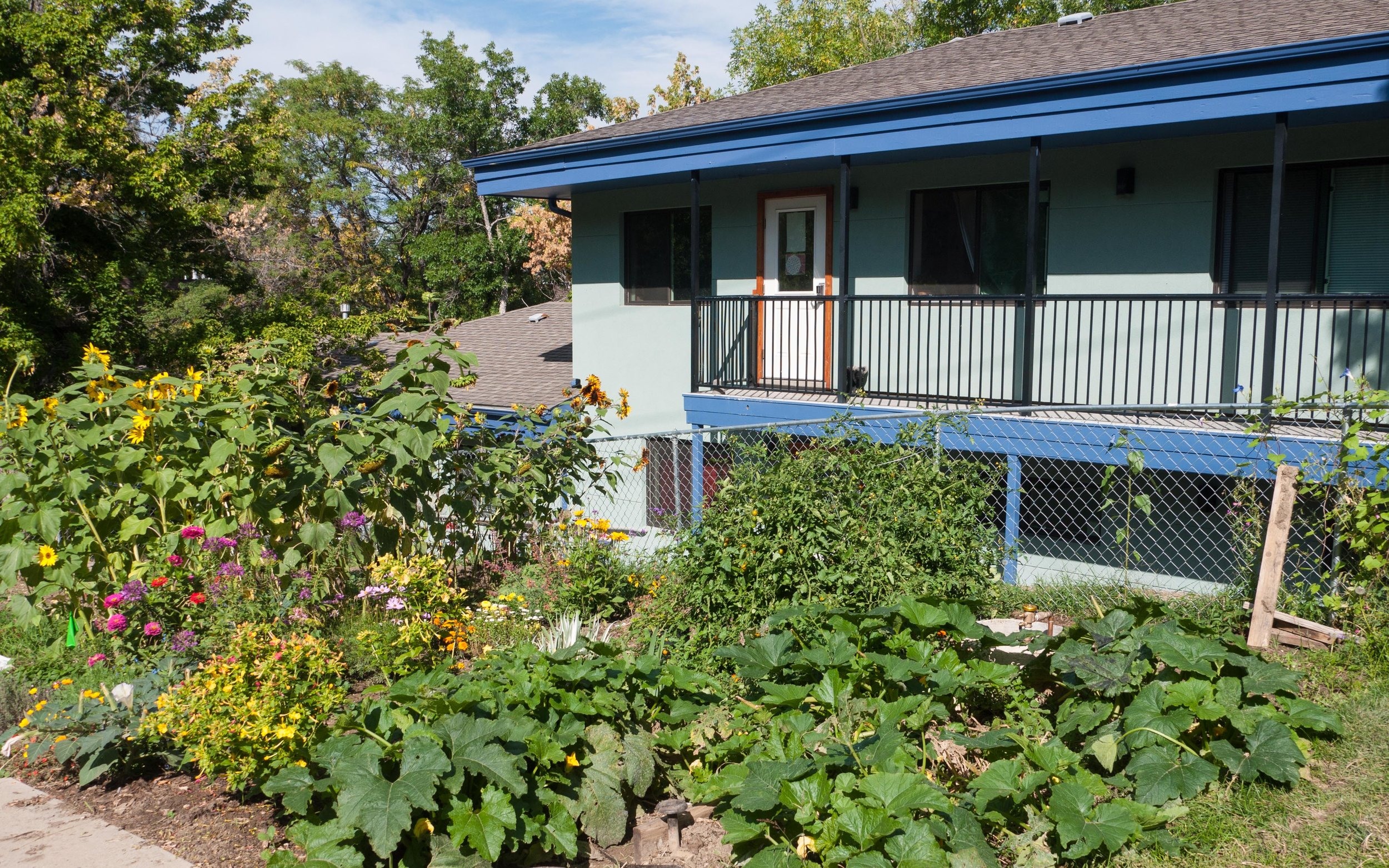 Ostara Cooperative Vegetable Garden. Credit: Boulder Housing Coalition