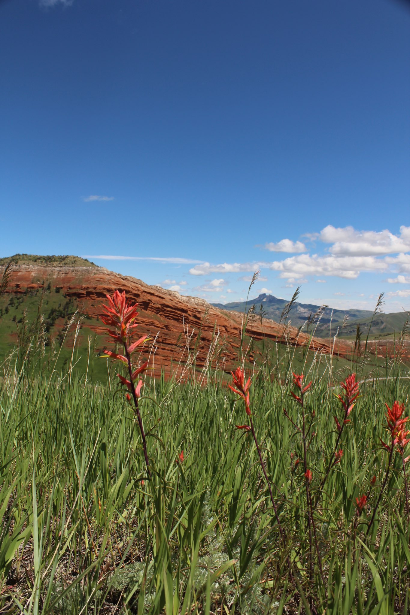 Heart Mountain in the distance from Chief Joseph Scenic Highway.  Photo by Patti Umphlet.