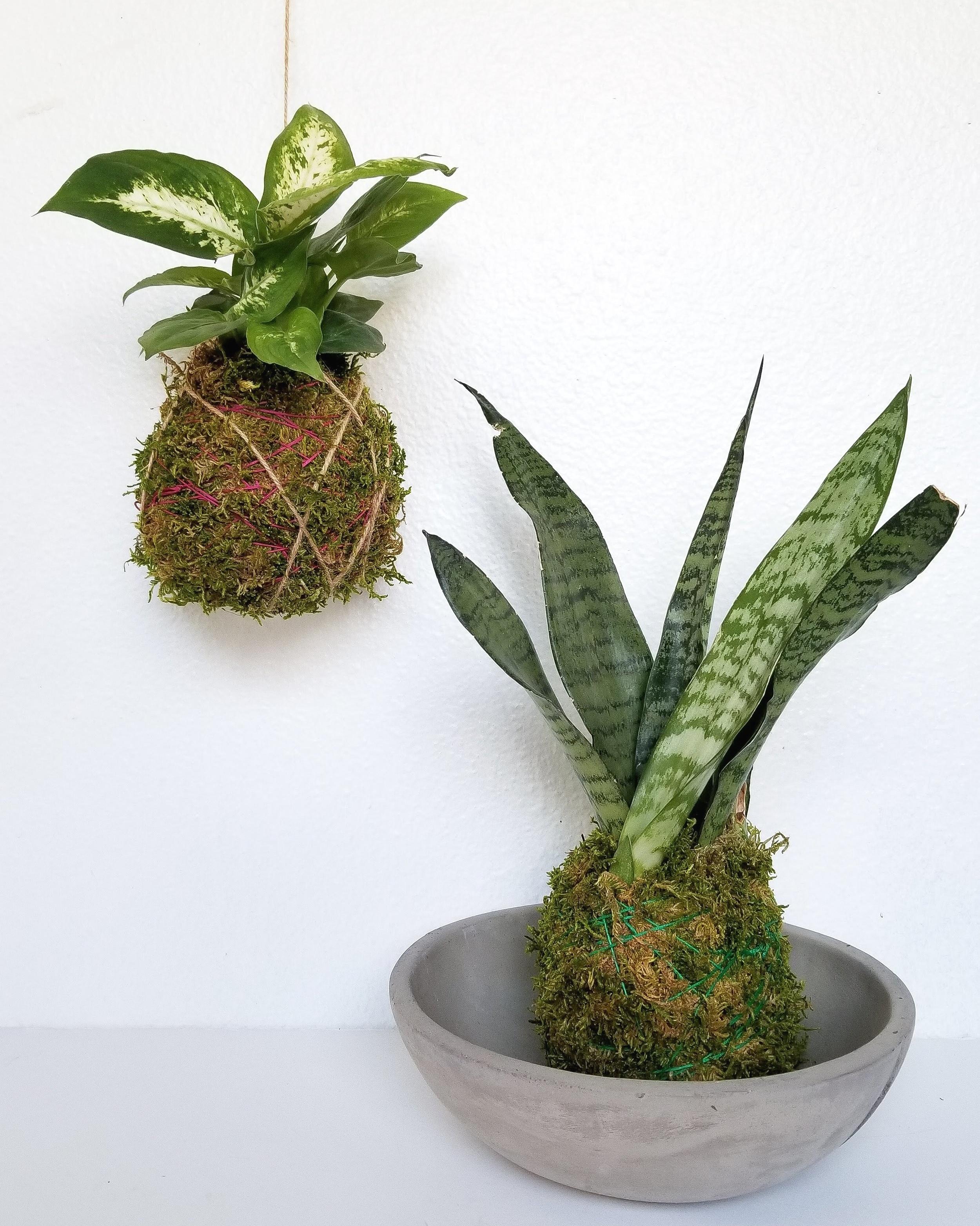 kokedama-houseplant-workshop-portland