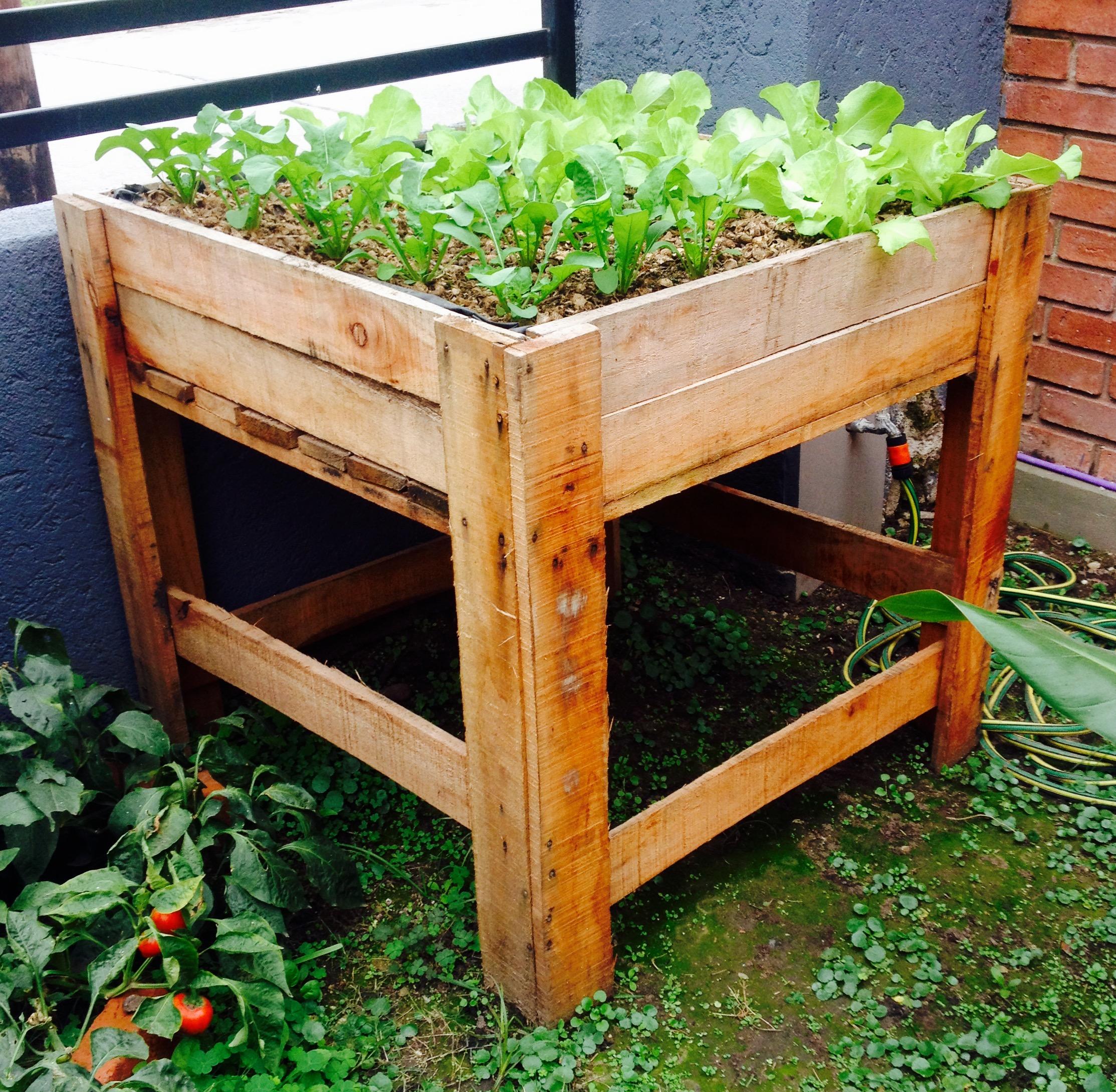 Raised beds for fresh produce in Córdoba, Argentina