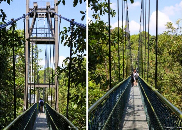 Suspension bridge at TreeTop Walk