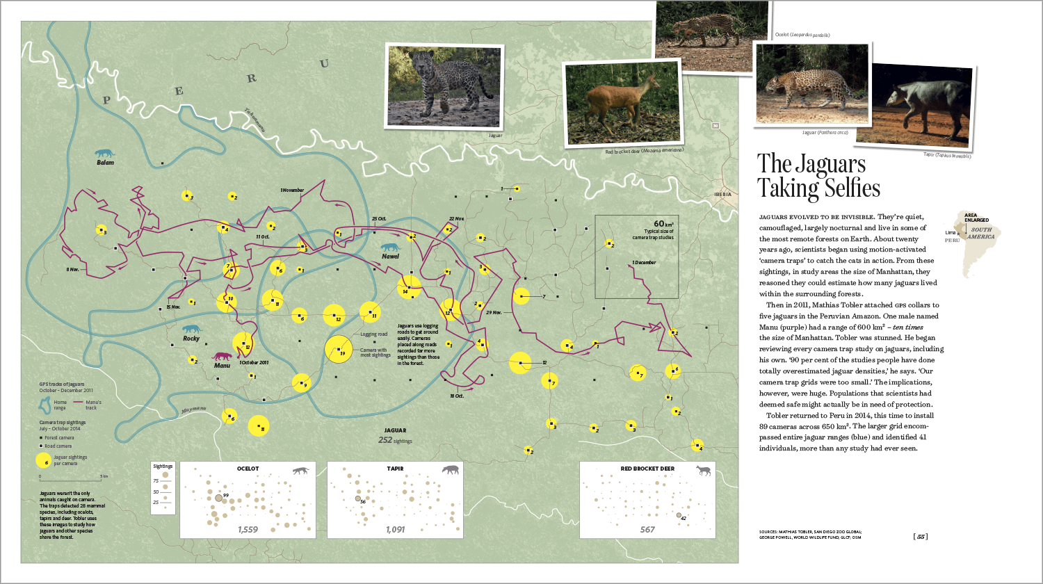 On this map, we show a grid of 89 camera traps that Mathias Tobler (San Diego Zoo Global) used to detect jaguars in the Peruvian Amazon. Yellow circles indicate the number of jaguar sightings at each camera; blue contours show the extent of individual jaguar ranges within the 650 km2 grid.
