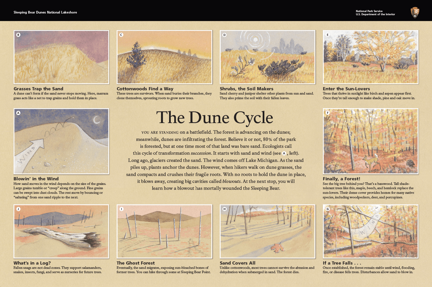 The Dune Cycle