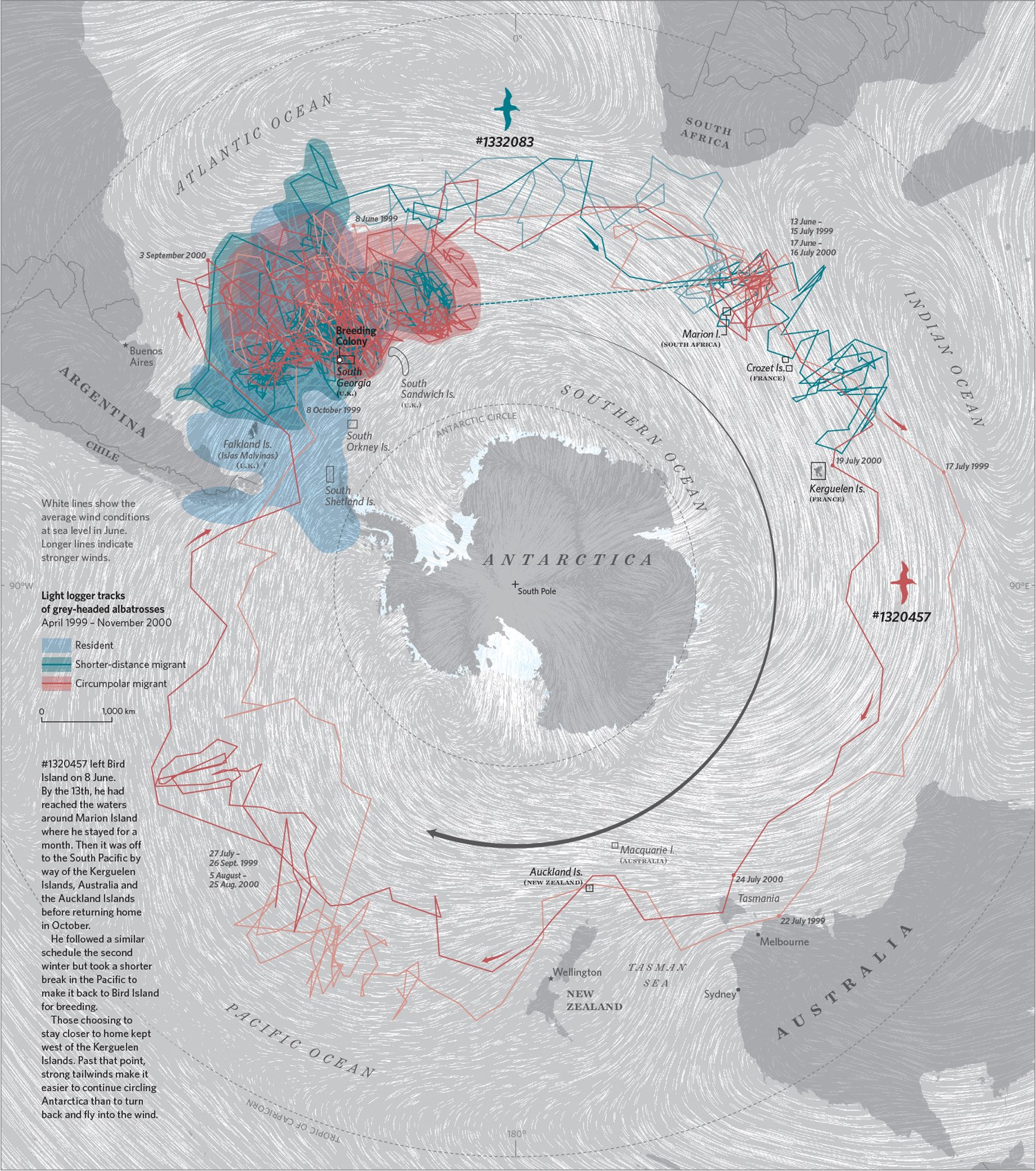 The Albatrosses Circling Antarctica   Where the Animals Go   2016