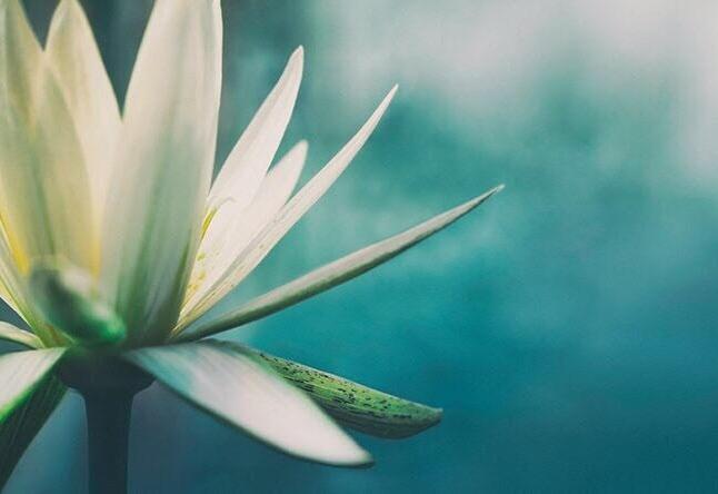 Mindfulness Bergamo fiore di loto