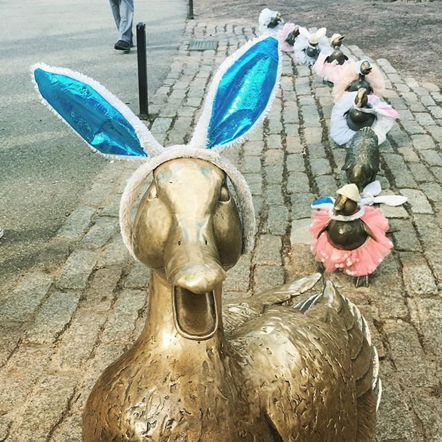 Hoppy Easter weekend from Massachusetts! #mvic #massachusetts #makewayforducklings