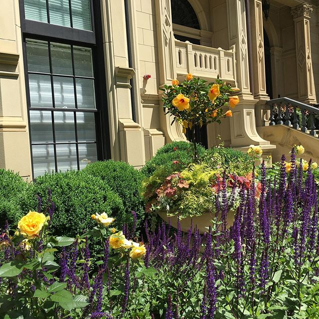 The beautiful summer gardens of Comm Ave in Boston #boston #matourism #mvic #commave #massachusetts