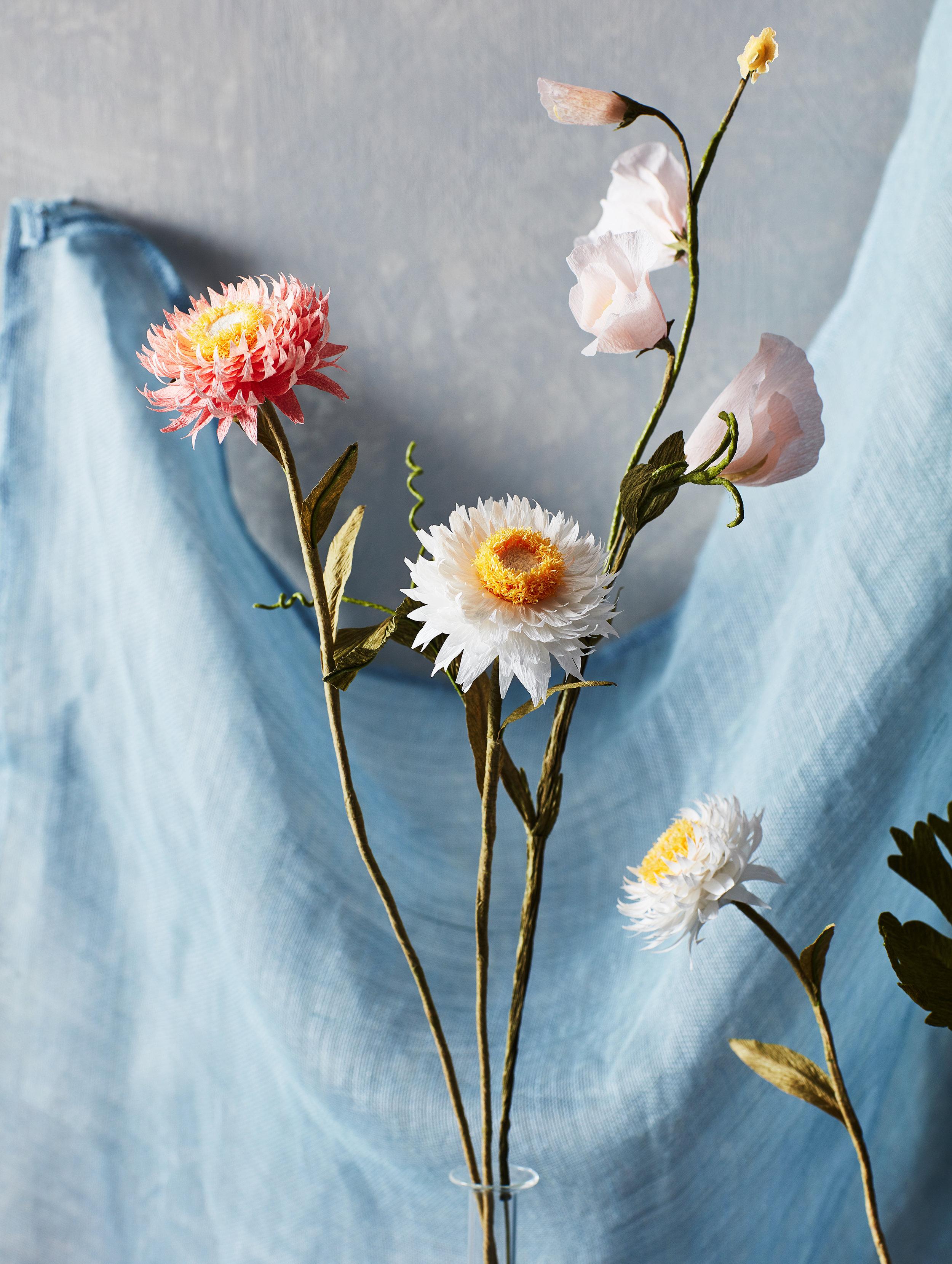Strawflowers_Pink_Columbine_6.jpg