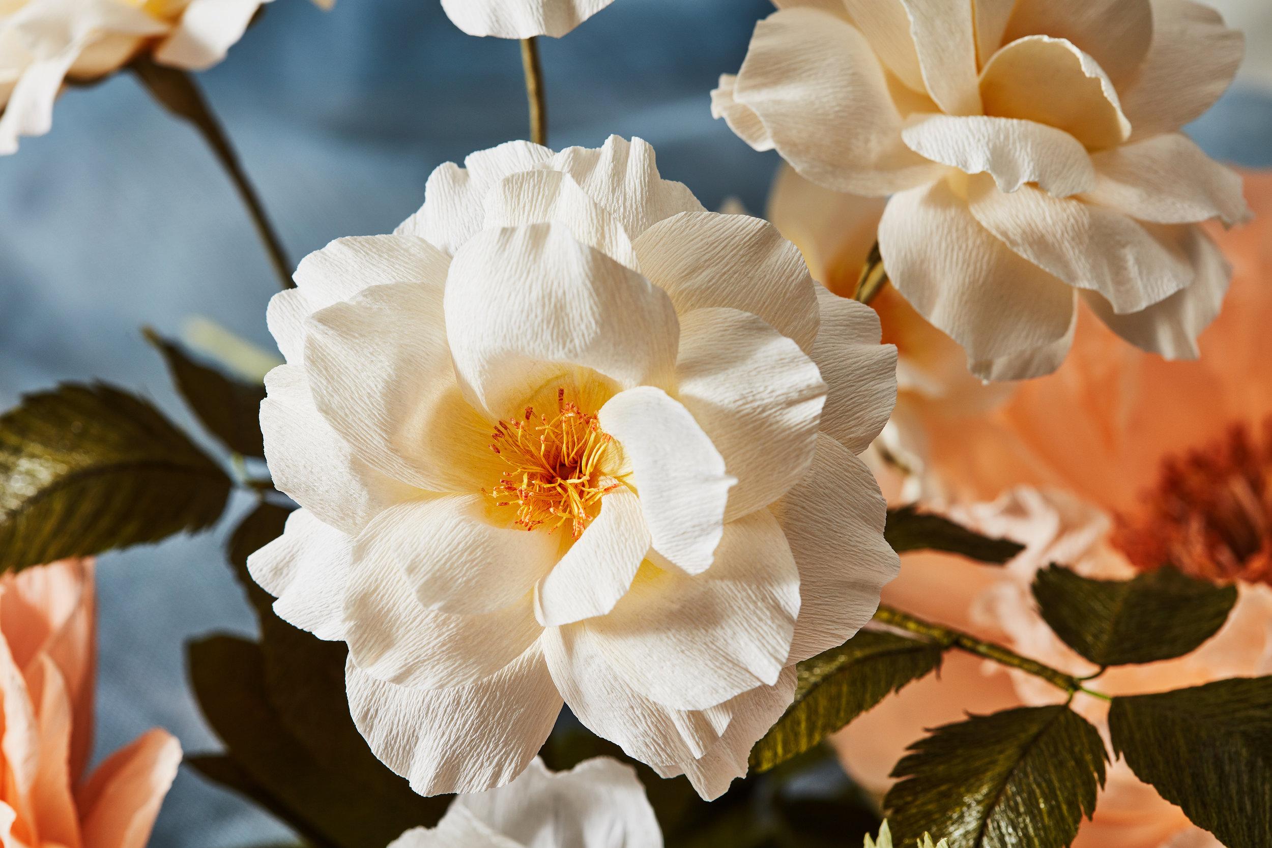 Peach_Floribunda_Rose_Branch_2.jpg
