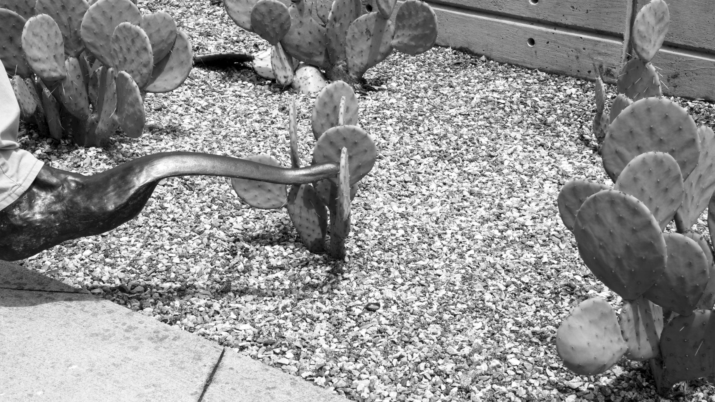 COMPANY_cactus_foot_tap_300.jpg