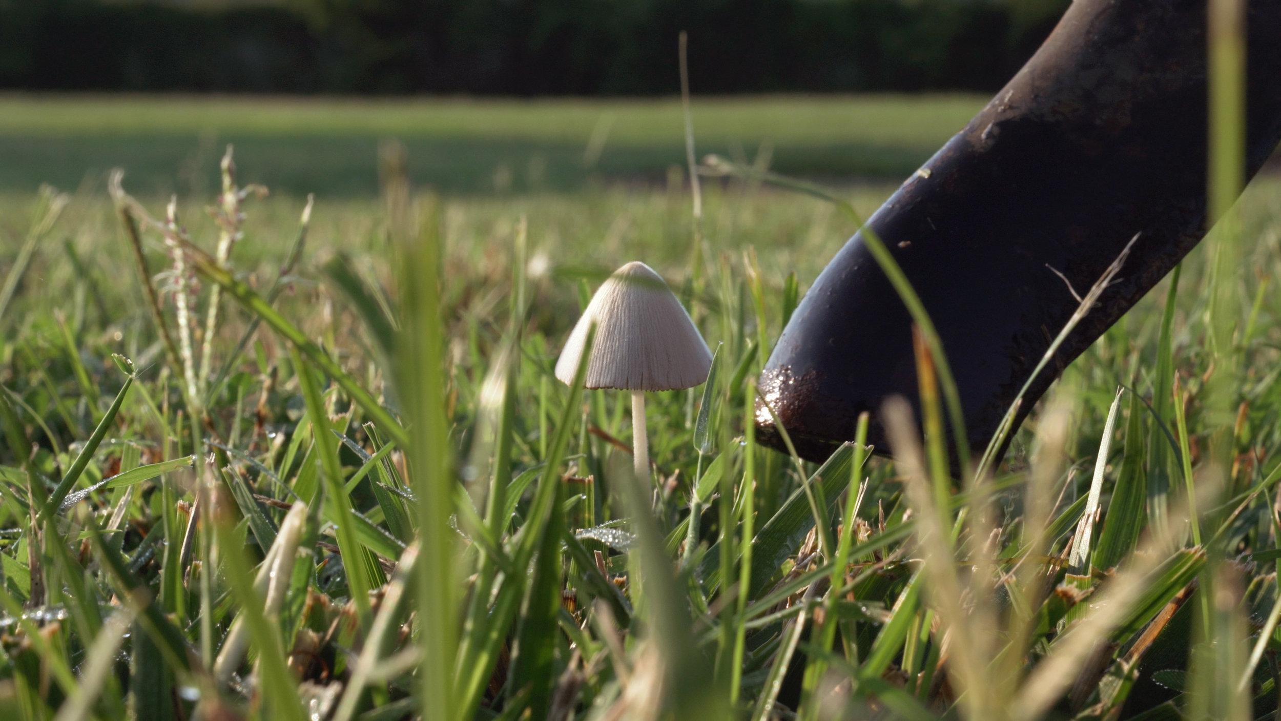 COMPANY_mushroom_tap.jpg