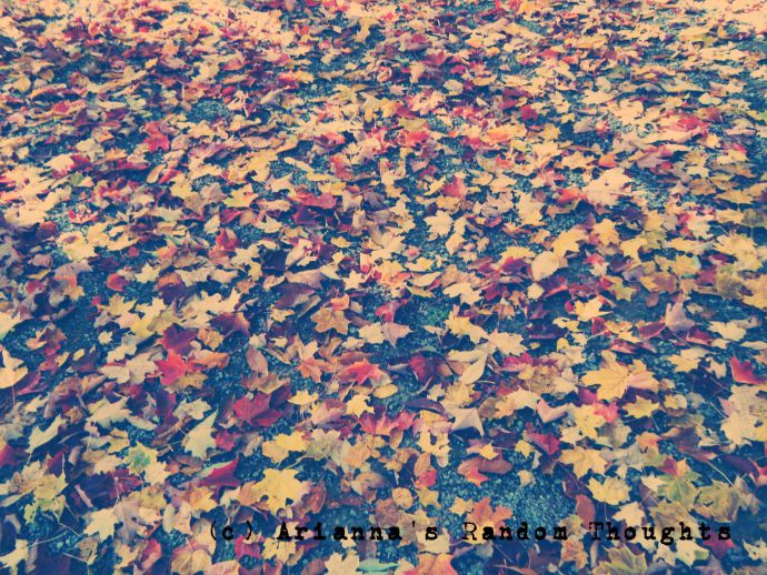 Different coloured leaves covered by path.