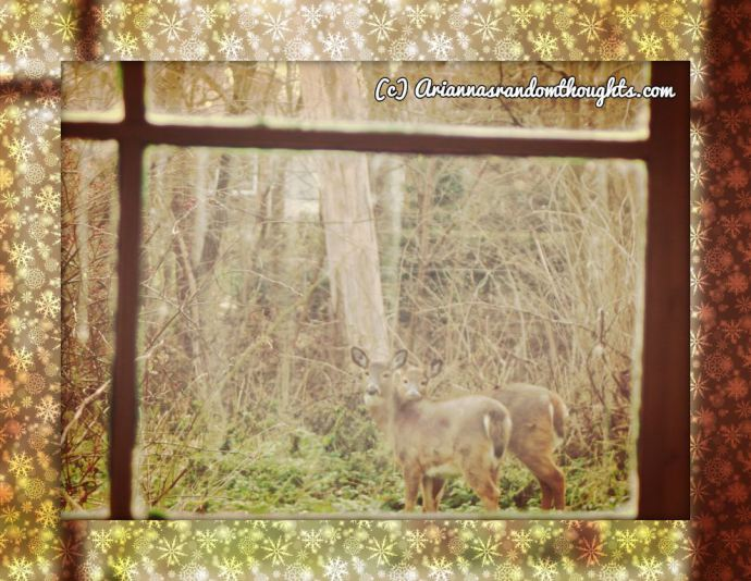 Seeing the deer in the window caused me to sit and reflect on Christmas.