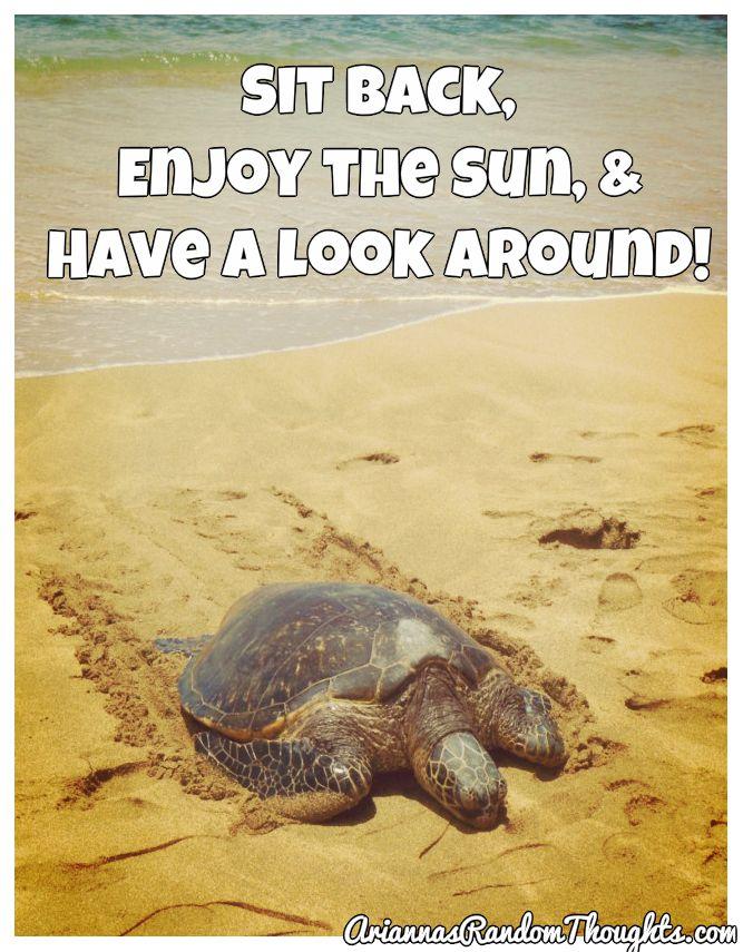 BeFunky_turtle 2.jpg