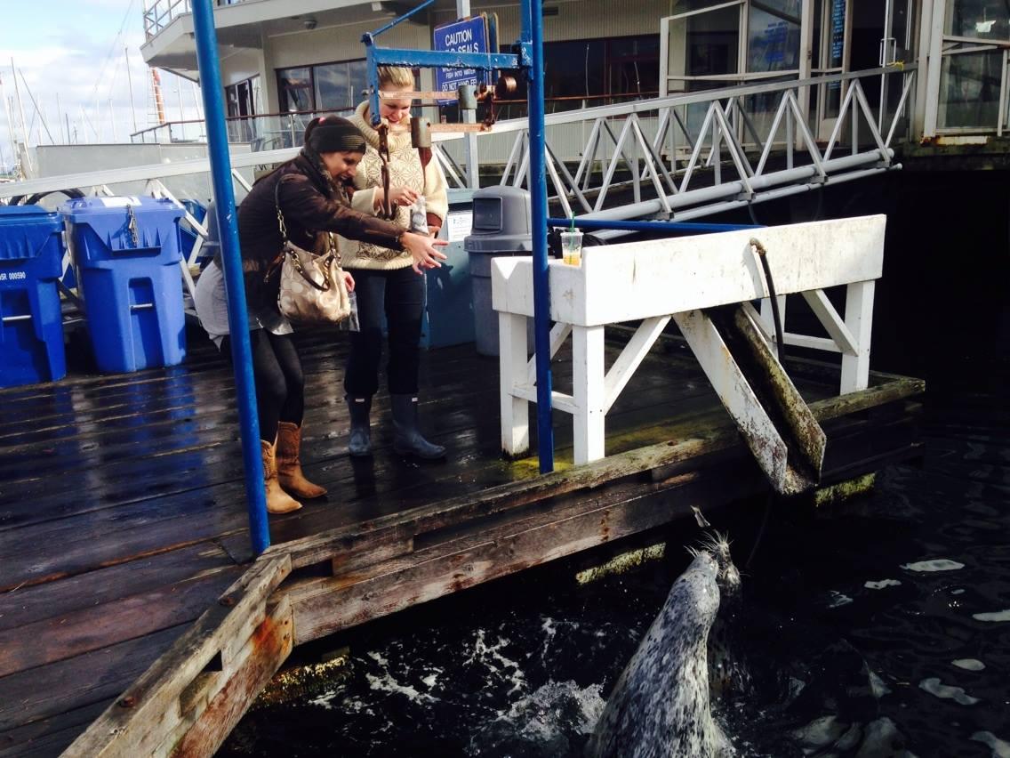 Feeding the seals at Oak Bay Marina.