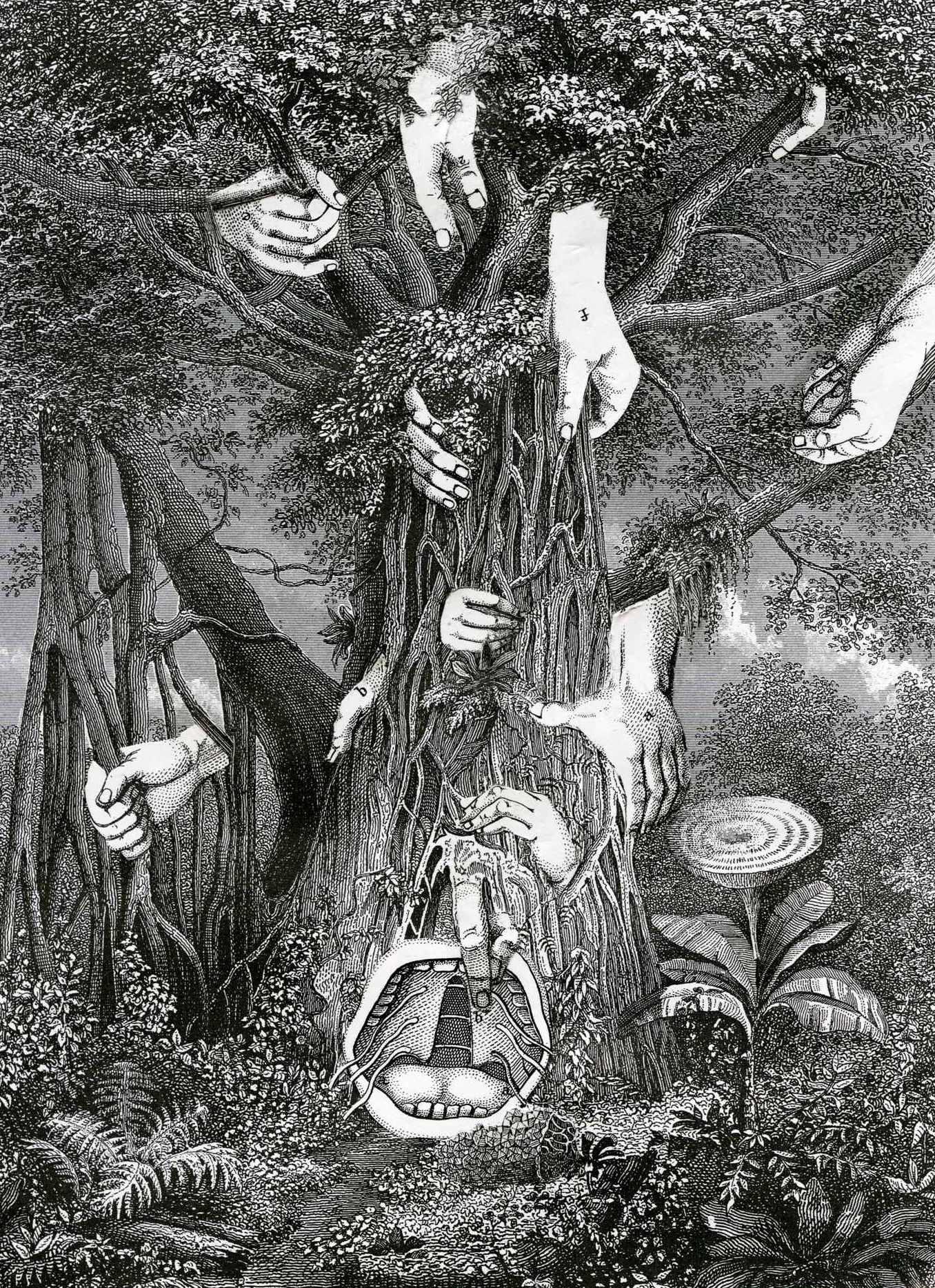 Floribus Mali I