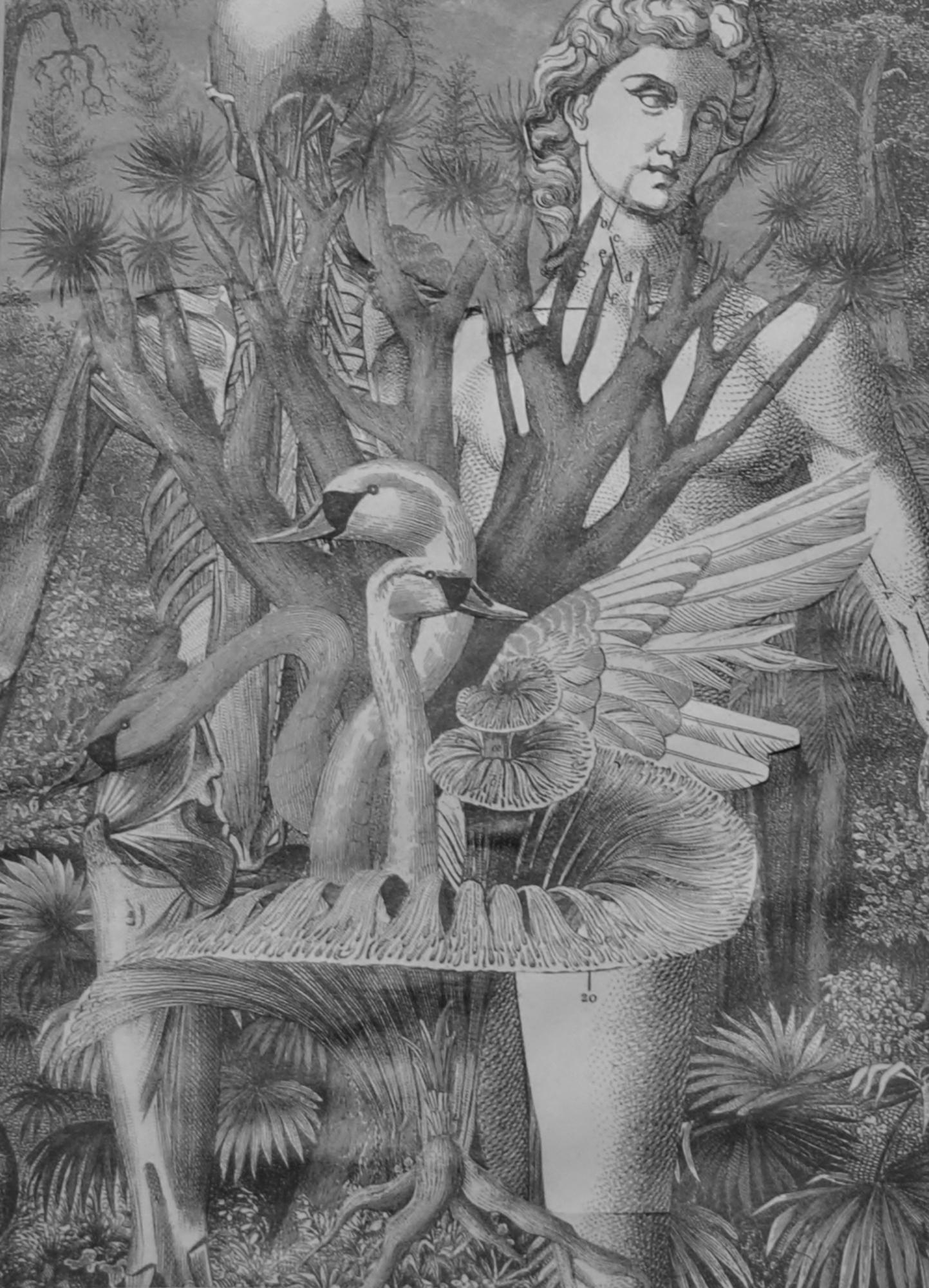 Swans @Imago gallery, Warren, RI