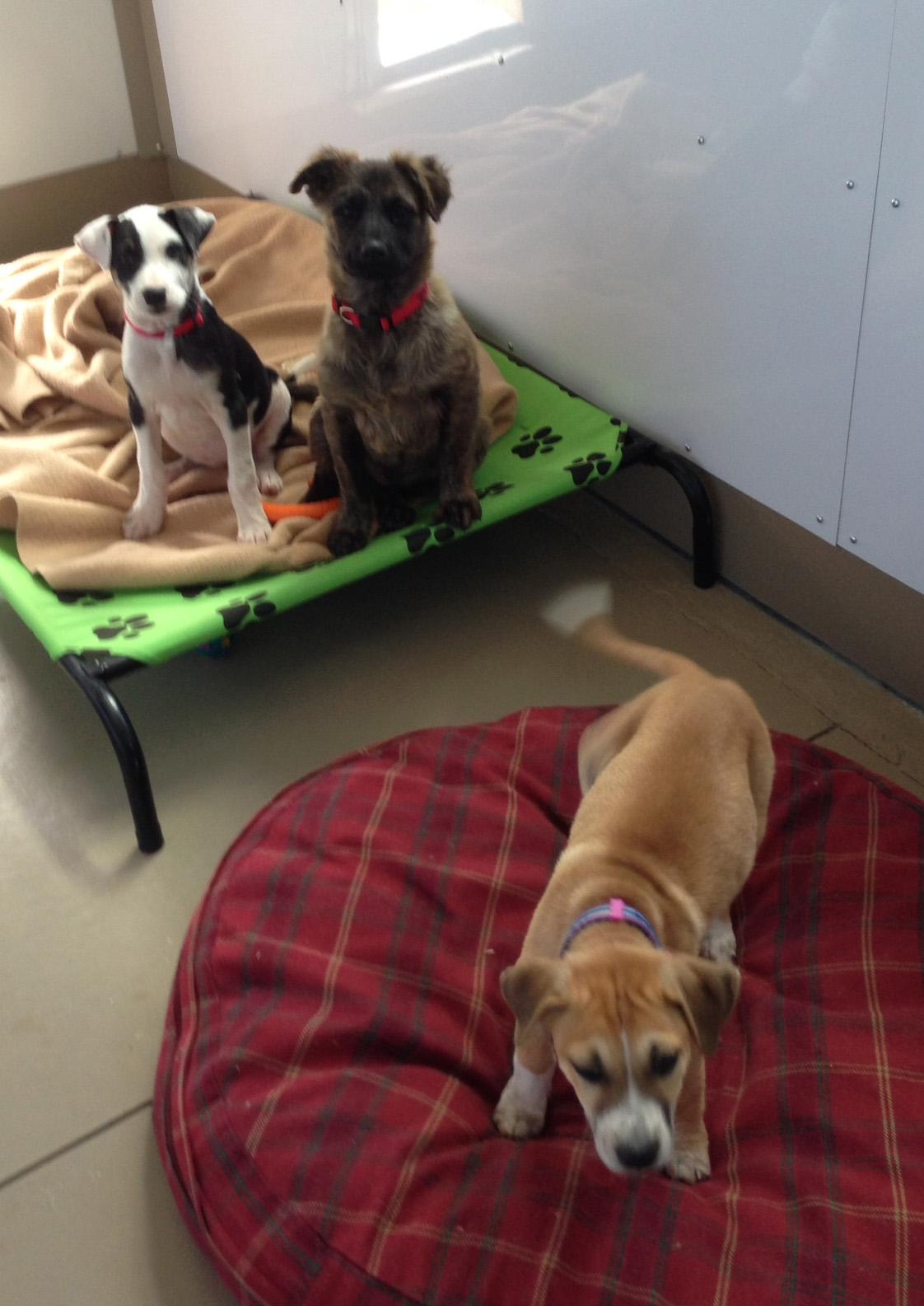Dana, Zorra, and Cata.jpg