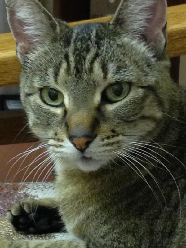 Miss Kitty 2.jpg