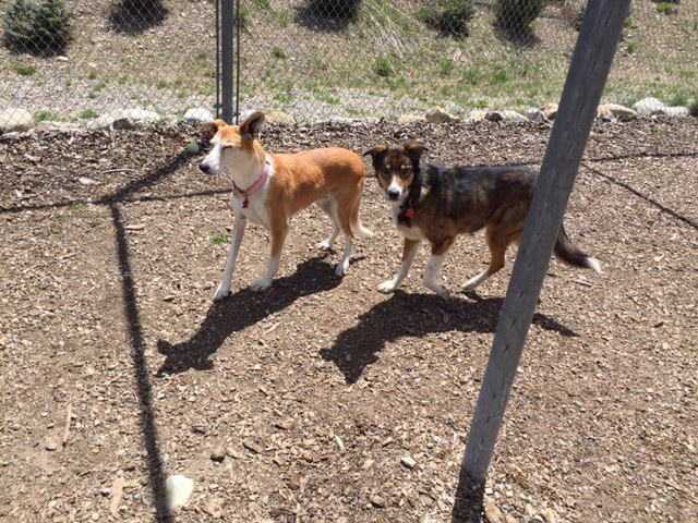 Gypsy and Zola Playing.jpg