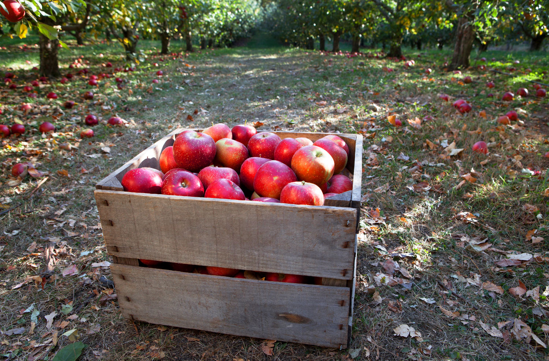 trademark-classes-apples