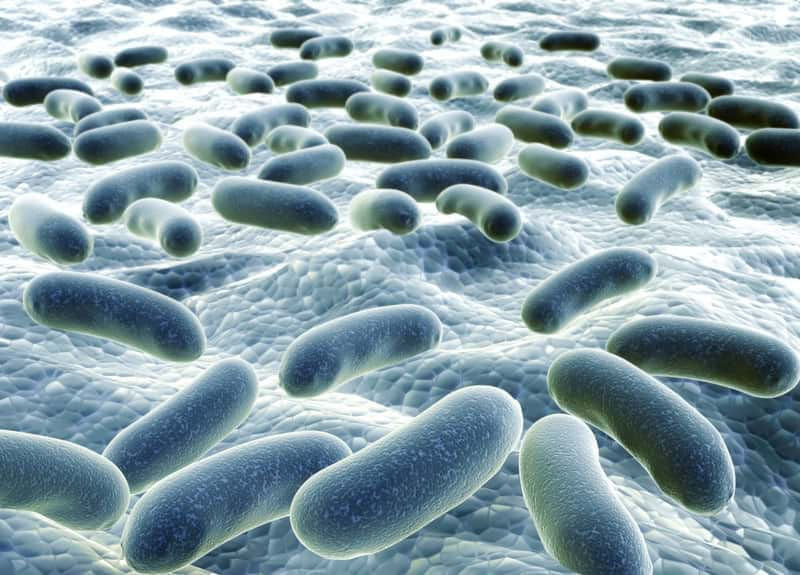 Bacteria associated with plaque and tartar