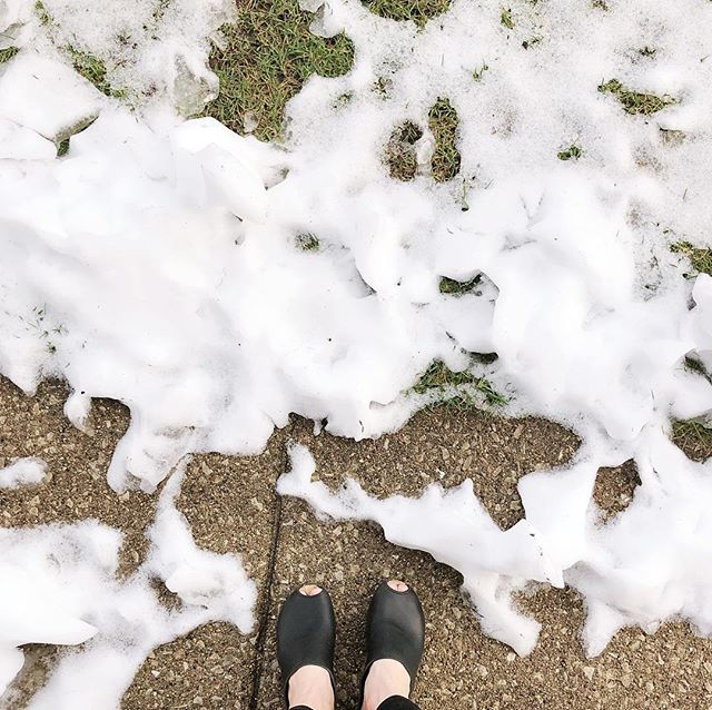 Spring in Chicago. Peep toes, piles of snow, and a garbage poinsettia we stole to the office to rehabilitate.  #grainlinegreenhouse