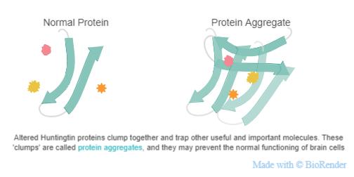 Protein-aggregates.jpeg