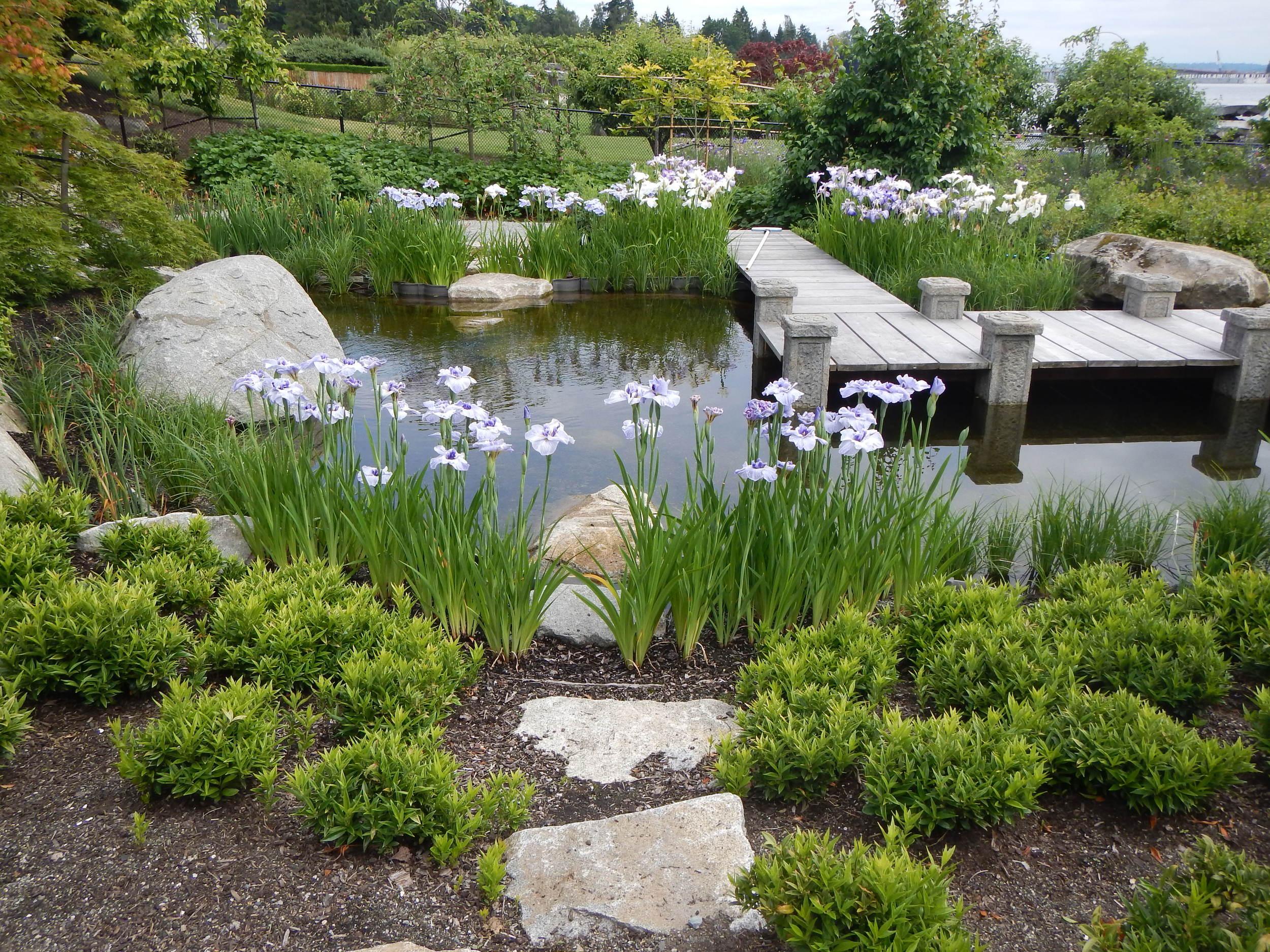 Nice Pond Photo.JPG