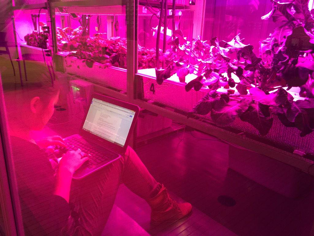 cityfarm work 2.jpg