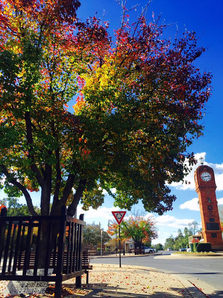 Colourful Tree.jpg