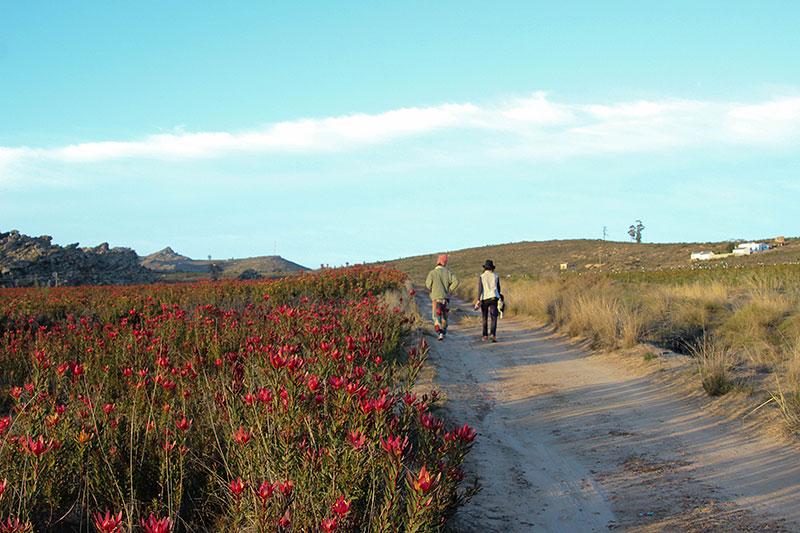 Weekend_Getaways_near_Cape_Town_Groot_Winterhoek_Budget_Affordable_Activities_Porterville_mountains_6.jpg