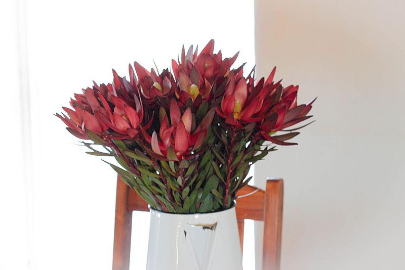 Weekend_Getaways_near_Cape_Town_Groot_Winterhoek_Budget_Affordable_Activities_Porterville_mountains_flowers.jpg
