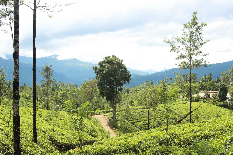 Sri_Lankan_Travel_Guide_Itinerary_Budgeting__From_Kandy_to_Ella_4.jpg
