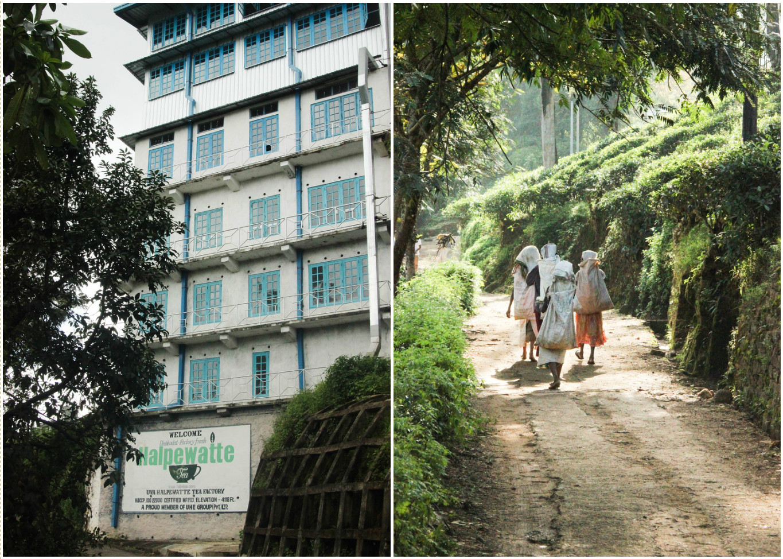 Sri_Lankan_Travel_Guide_Itinerary_Budgeting__Ella_Hiking_Adam's_Peak_Where_to_stay__halpwette.jpg