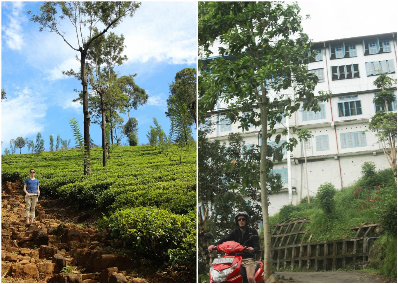 Sri_Lankan_Travel_Guide_Itinerary_Budgeting__Ella_Hiking_Adam's_Peak_Where_to_stay_teac_factory.jpg
