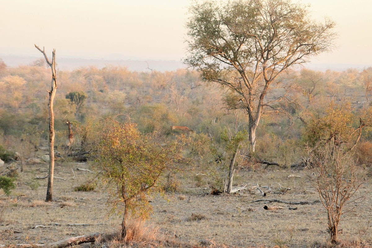 Why_Visit_the_kruger_national_park_in_south_africa_bush.jpg