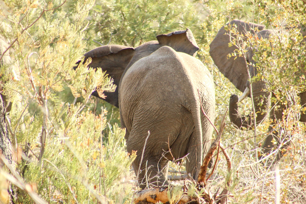 Why_Visit_the_kruger_national_park_in_south_africa_fighting-elephants.jpg