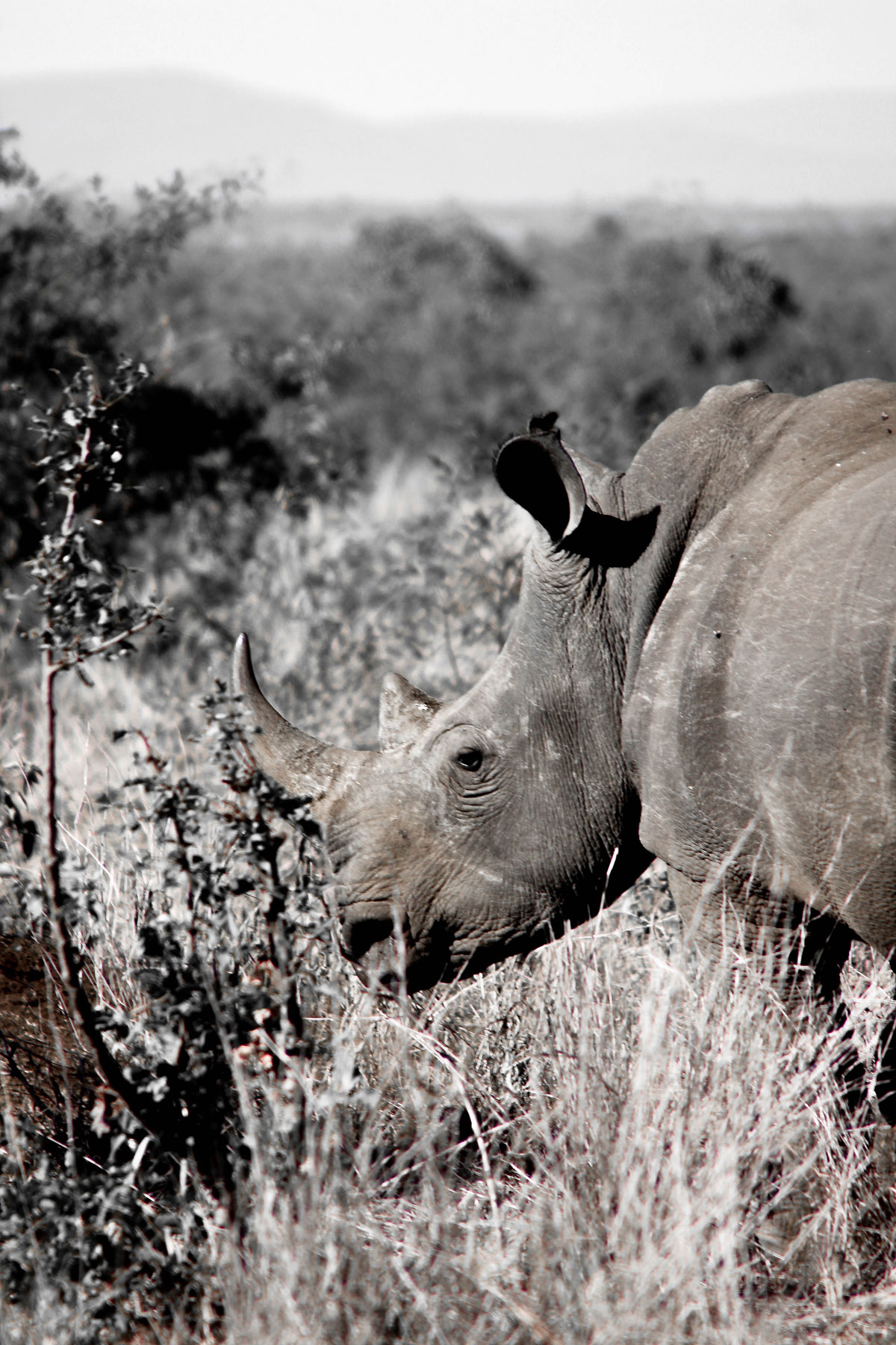 Why_Visit_the_kruger_national_park_in_south_africa_rhino.jpg