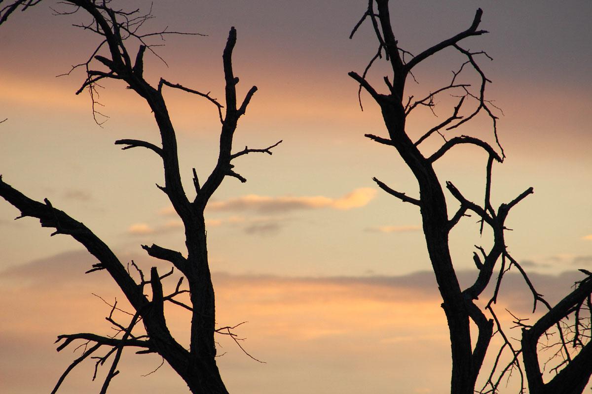 Why_Visit_the_kruger_national_park_in_south_africa_pastels.jpg