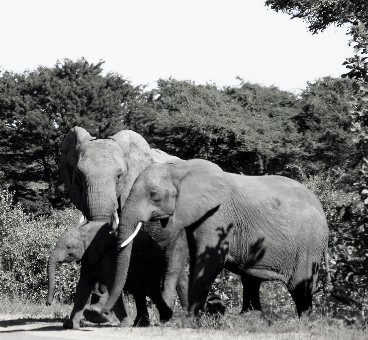 Why_Visit_the_kruger_national_park_in_south_africa_5.jpg
