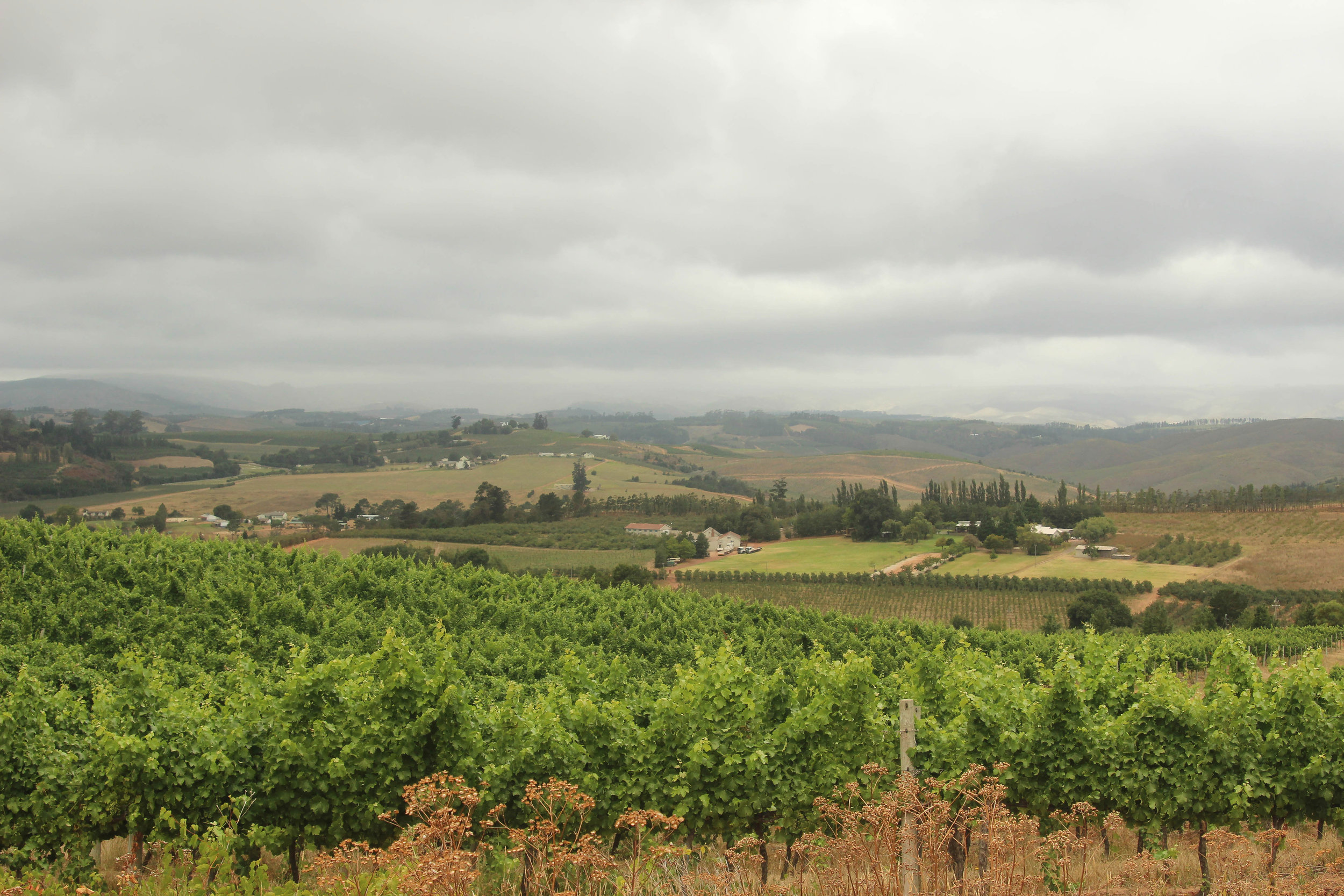 Elgin_valley_farms.jpg